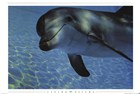 Aquatic and Sea Life Art Prints