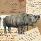 Hippopotamus  Art Prints