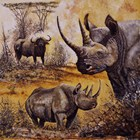 Rhinoceros  Art Prints