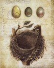 Feathers and Nests Art Prints