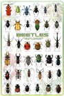 Bugs and Insects Art Prints