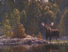 Moose and Elk Art Prints