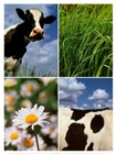 Farm Animal Art Prints