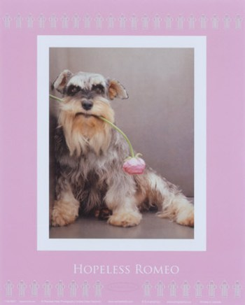 Hopeless Romeo  Fine-Art Print