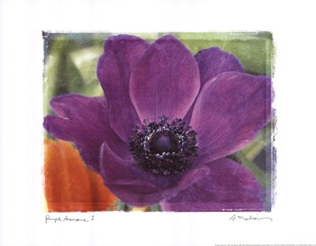 Purple Anemones I  Fine-Art Print