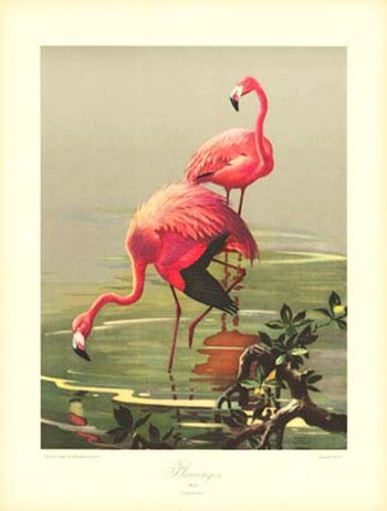 Flamingoes  Fine-Art Print