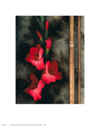 Red Gladiola and Black Bamboo  Fine-Art Print