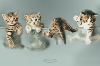 Kittens  Wall Poster