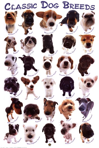 Dog Breeds  Fine-Art Print