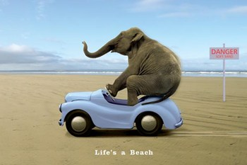 Life's a Beach  Wall Poster