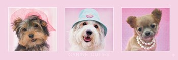 Canine Cuties  Wall Poster