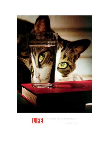 LIFE-Cat with Water Glass  Fine-Art Print