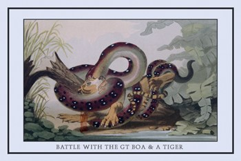 Battle Between the Great Boa and a Tiger  Fine-Art Print