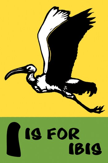 I is for Ibis  Fine-Art Print
