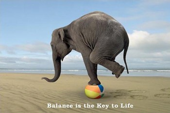 Balance Is The Key - Elephant  Wall Poster