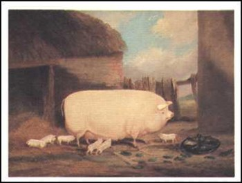 Sow with Her Piglets  Fine-Art Print