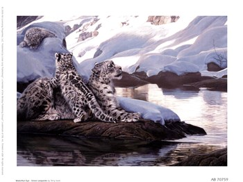 Watchful Eye - Snow Leopards  Fine-Art Print