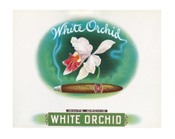 White Orchid  Wall Poster