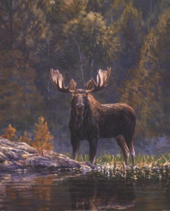 North Country Moose  Fine-Art Print
