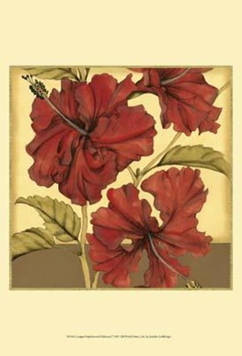 Cropped Sophisticated Hibiscus I  Fine-Art Print
