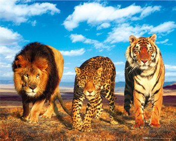Wild Cats  Wall Poster