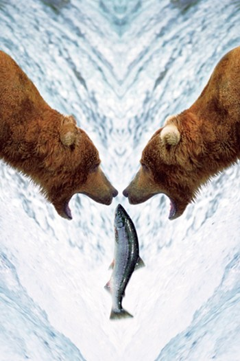 Two Bears For One Fish  Fine-Art Print