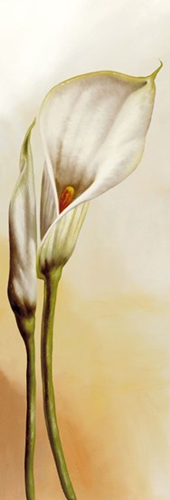 White Callas I  Fine-Art Print