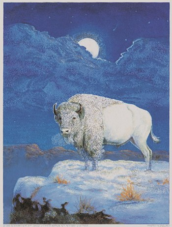 White Bison  Fine-Art Print