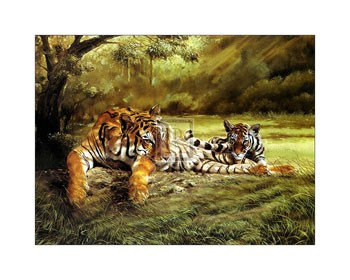 Tiger's Eye  Fine-Art Print